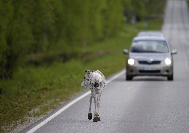 Ho ho ho! La Finlande a trouvé un remède contre les accidents de rennes!