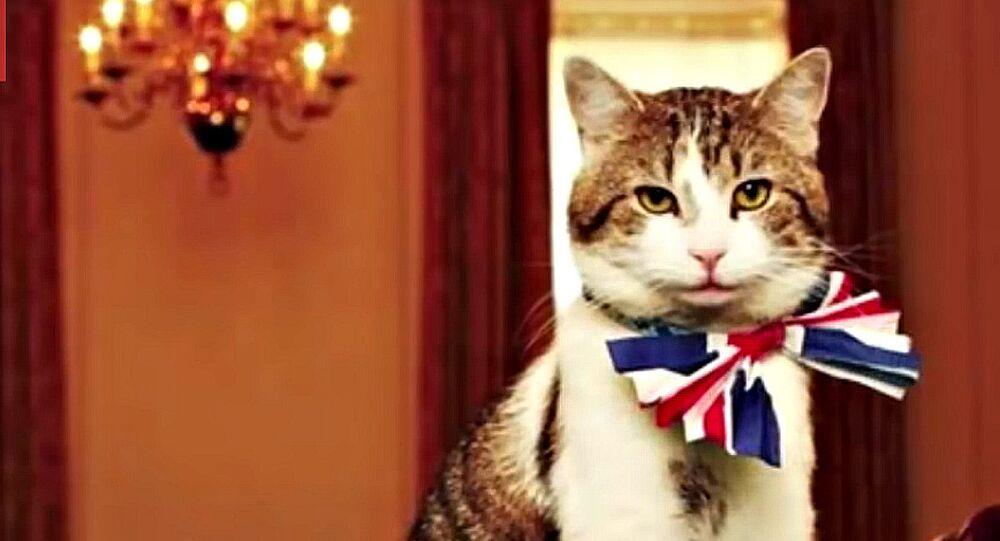 Incroyable mais vrai: petite histoire des animaux devenus maires