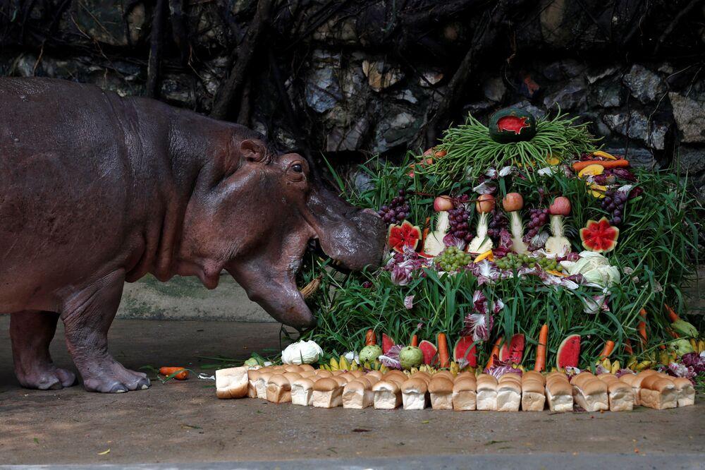 Un gâteau préparé à l'occasion des 50 ans de l'hippopotame Mali à Bangkok