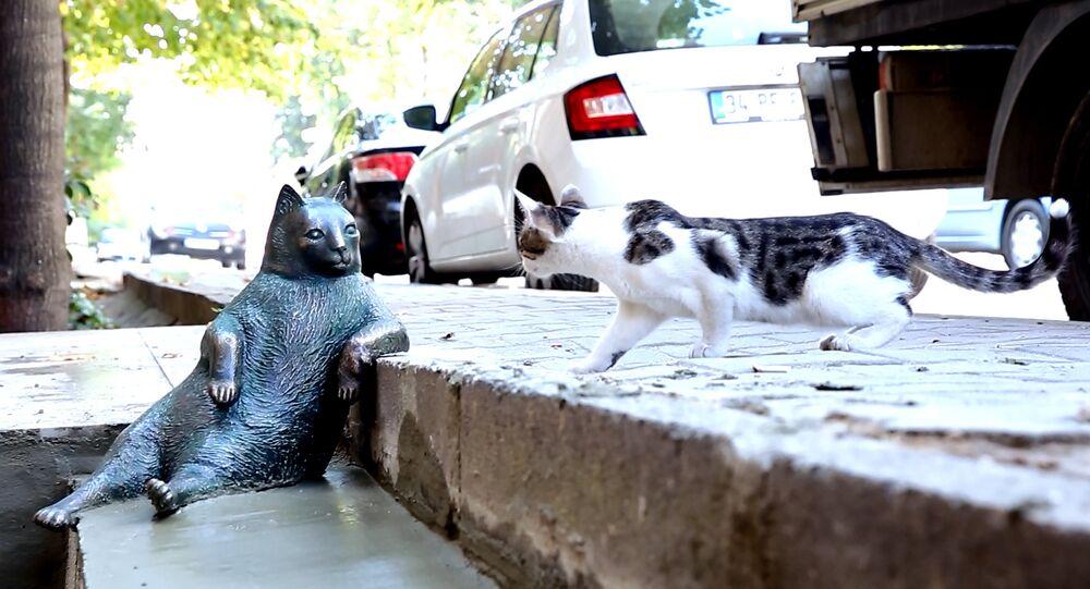 La statue du chat Tombili à Istanbul