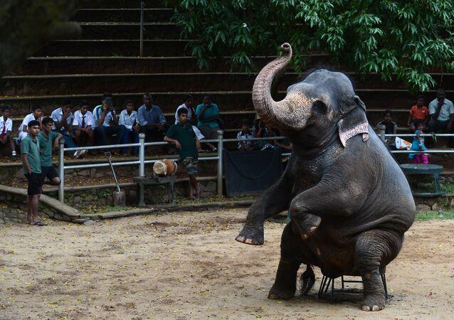 Les capacités intellectuelles des éléphants surprennent les scientifiques