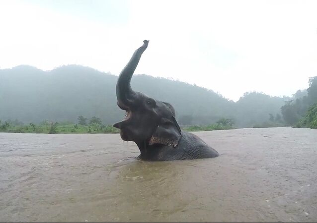 Un éléphant patauge joyeusement dans l'eau