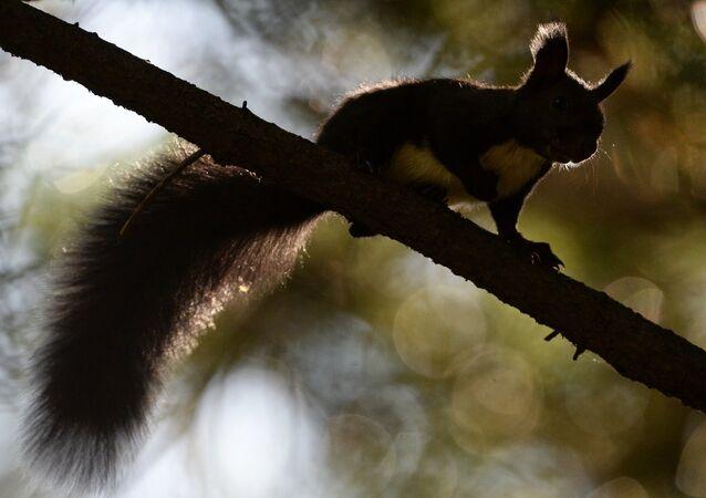 Des écureuils à Vladivostok