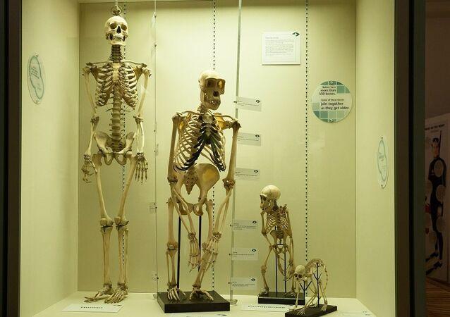 La taille de la pierre: révolution ou hasard de l'évolution?