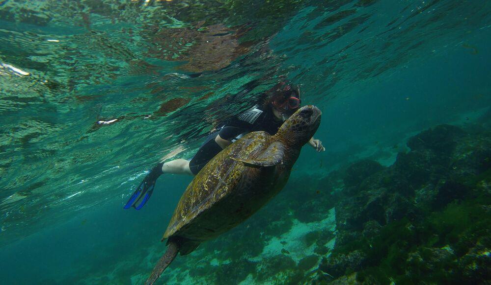 Nager avec des tortues est une des principales distractions de l'île San Cristóbal, en Équateur