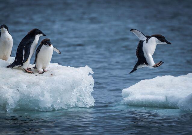L'Antarctique et ses habitants