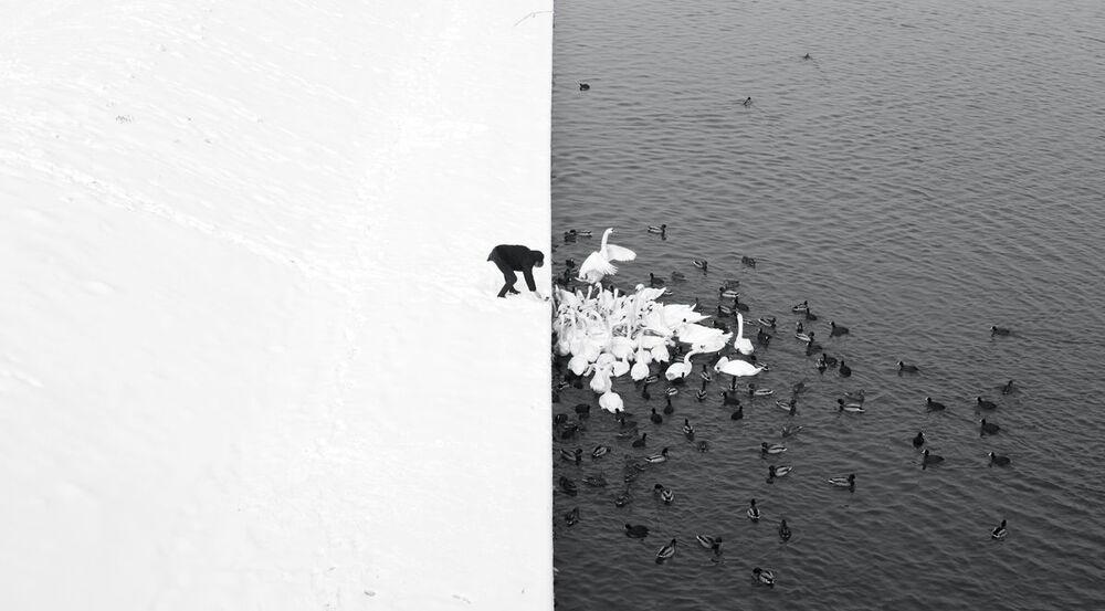 Фотография A man feeding swans in the snow польского фотографа Marcin Ryczek
