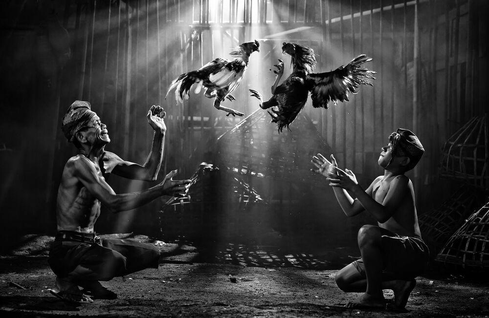 Фотография Cock fighting индонезийского фотграфа Pimpin Nagawan