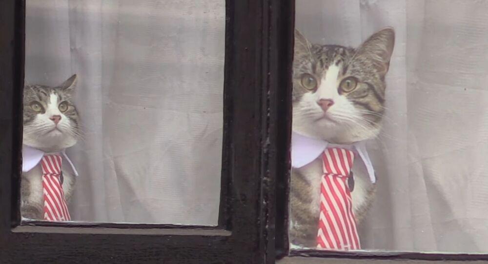 En plein interrogatoire, le chat d'Assange apparaît en cravate