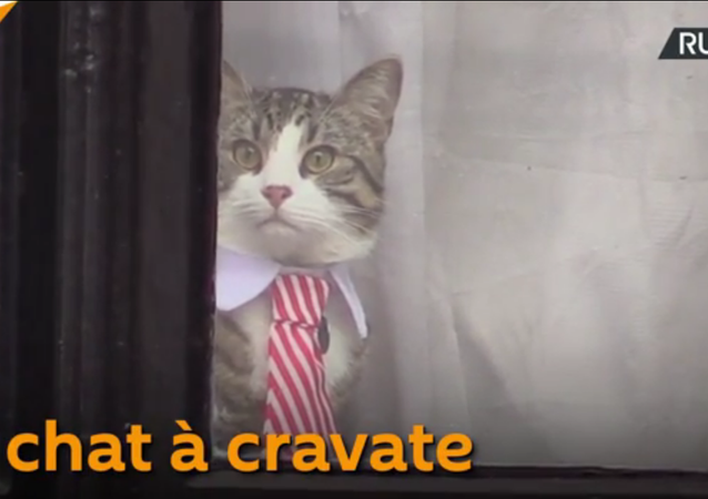 Chat à cravate