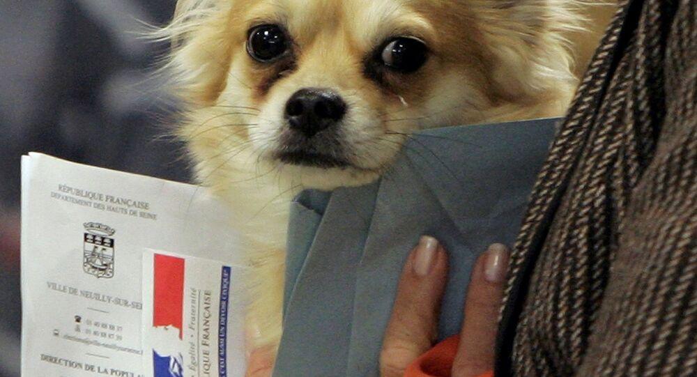 Un chien dans un bureau de vote