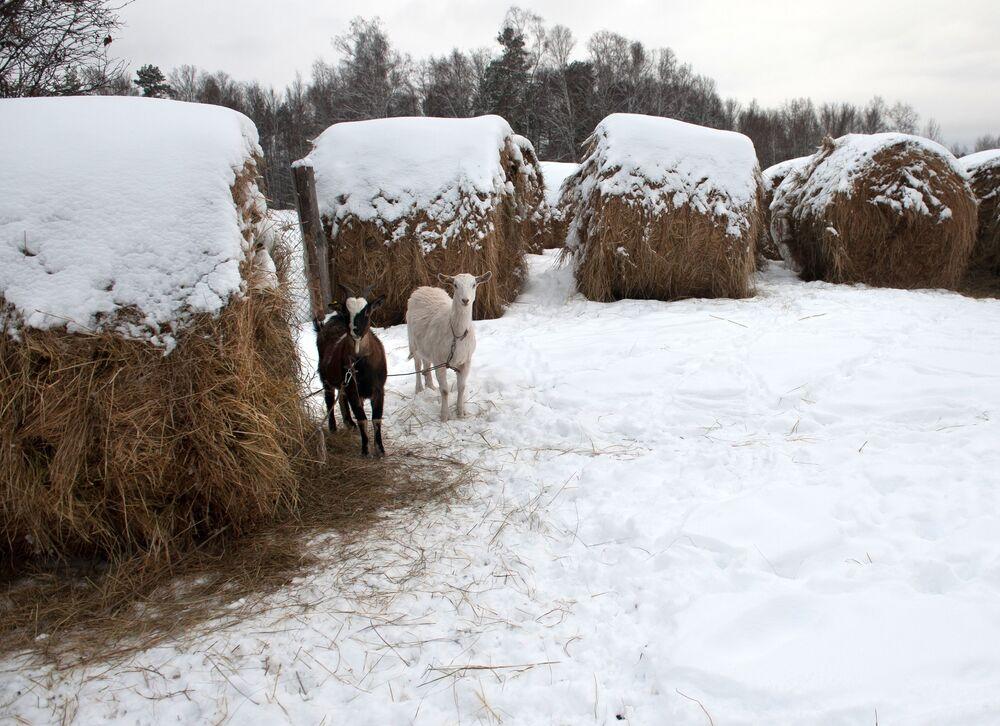 Le village de Berezovka, dans la région de Tomsk