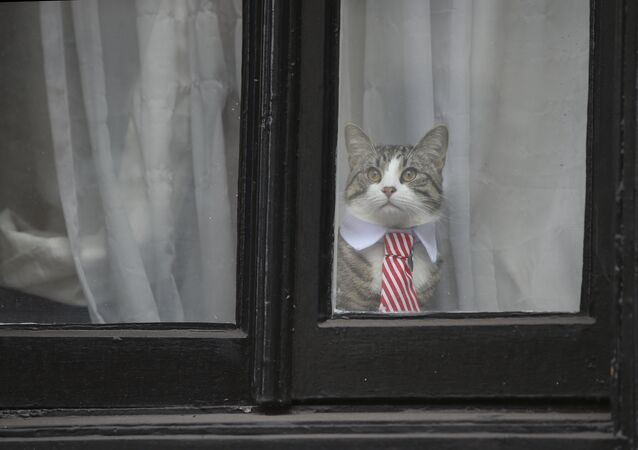 Le chat de Julian Assange