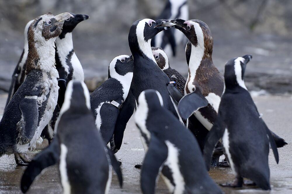 Des pingouins dans le grand aquarium du Croisic en France