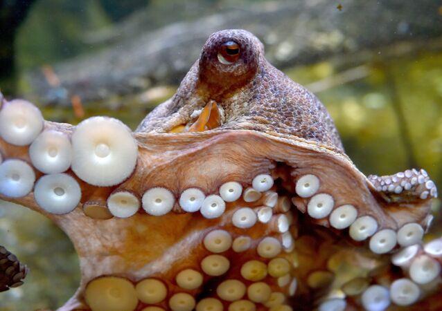 Une pieuvre