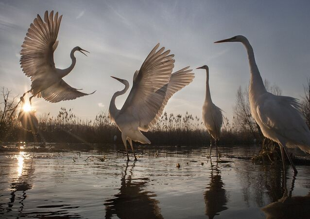 Concours National Geographic: les plus belles photos de la nature