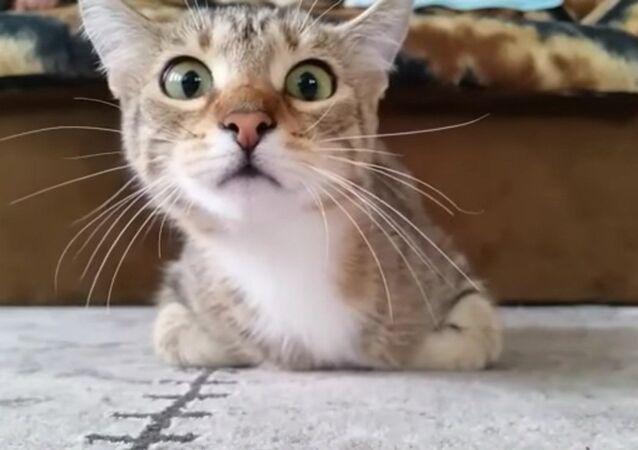 Un chat effrayé par un thriller