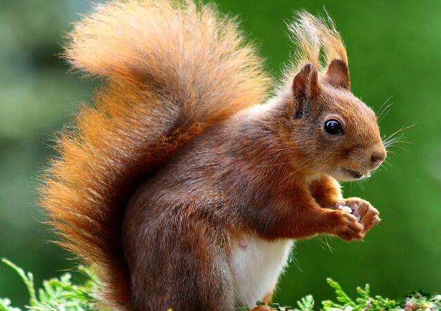 Quand les écureuils sont des voleurs récidivistes intouchables