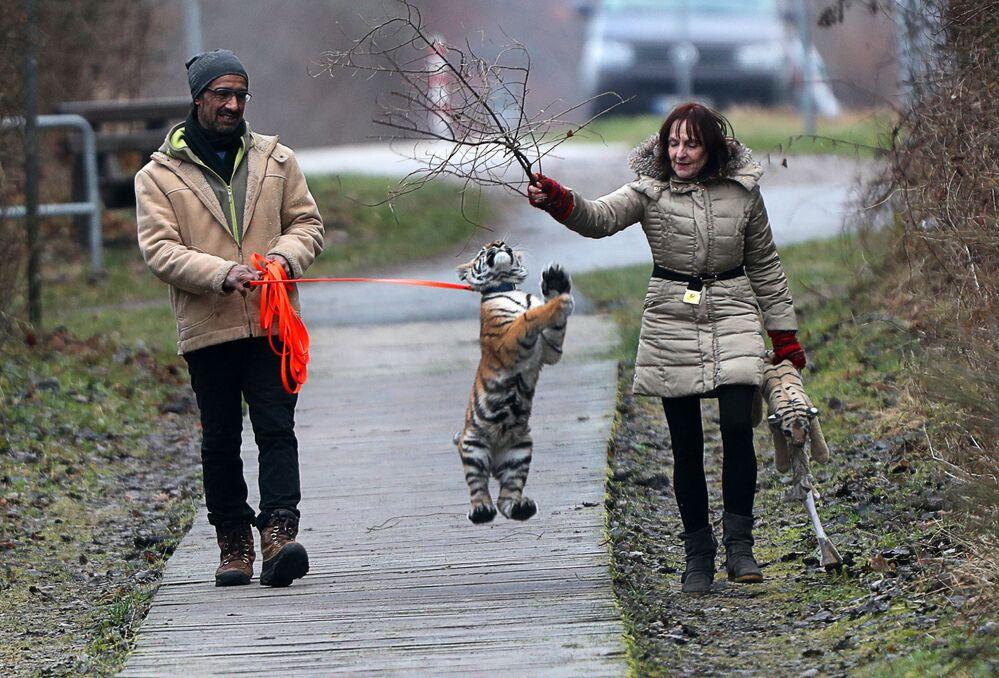 Saad Rose et Monica Farell élèvent une tigresse