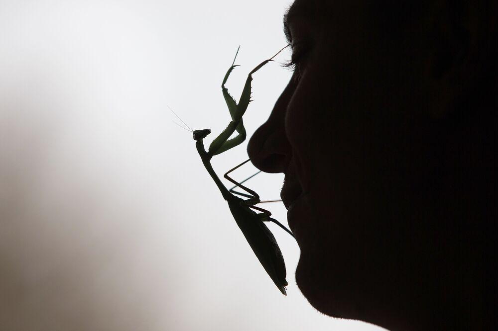 Un mantis assis sur le visage d'un gardien du zoo de Londres