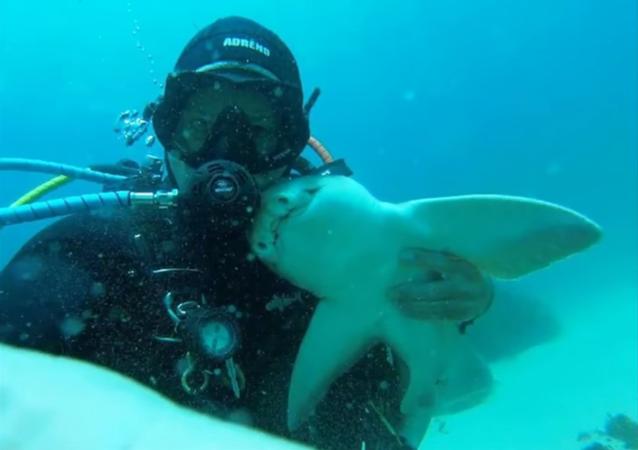 Des câlins gratuits… avec un requin!