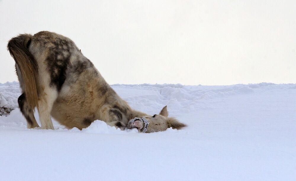 Les fortes chutes de neige ont causé  pas mal de soucis aux Allemands. Les animaux, de leur côté, étaient  très excités par ce cadeau de l'hiver