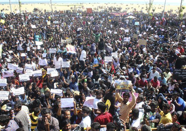 L'Inde dit finalement «oui» au rodéo traditionnel