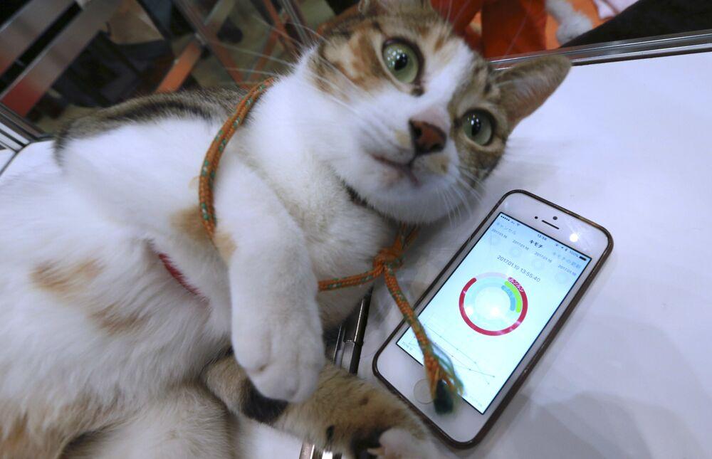 L'entreprise Anicall Corp a introduit dans une exposition à Tokyo un dispositif électronique pour les chats domestiques et d'autres animaux de compagnie