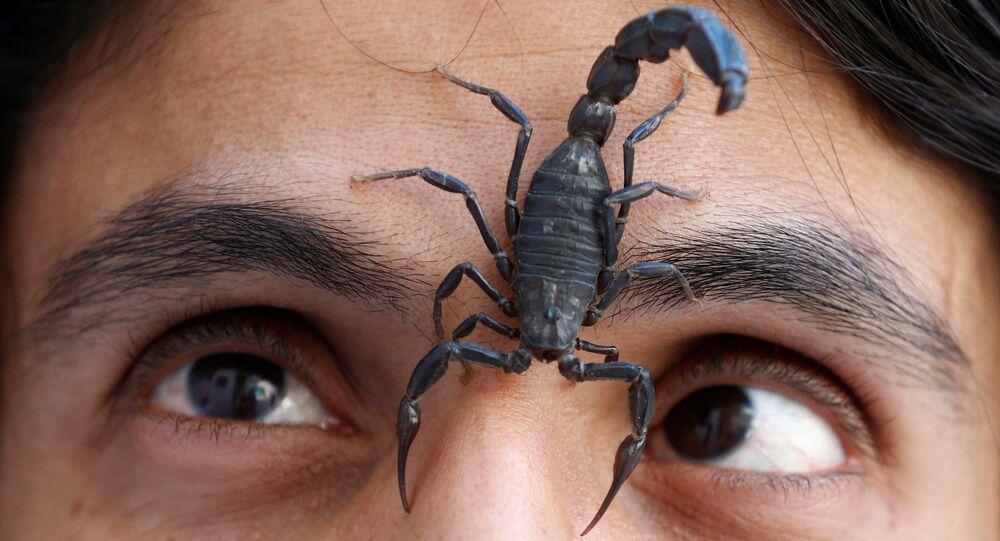 Danger de piqûre de scorpion