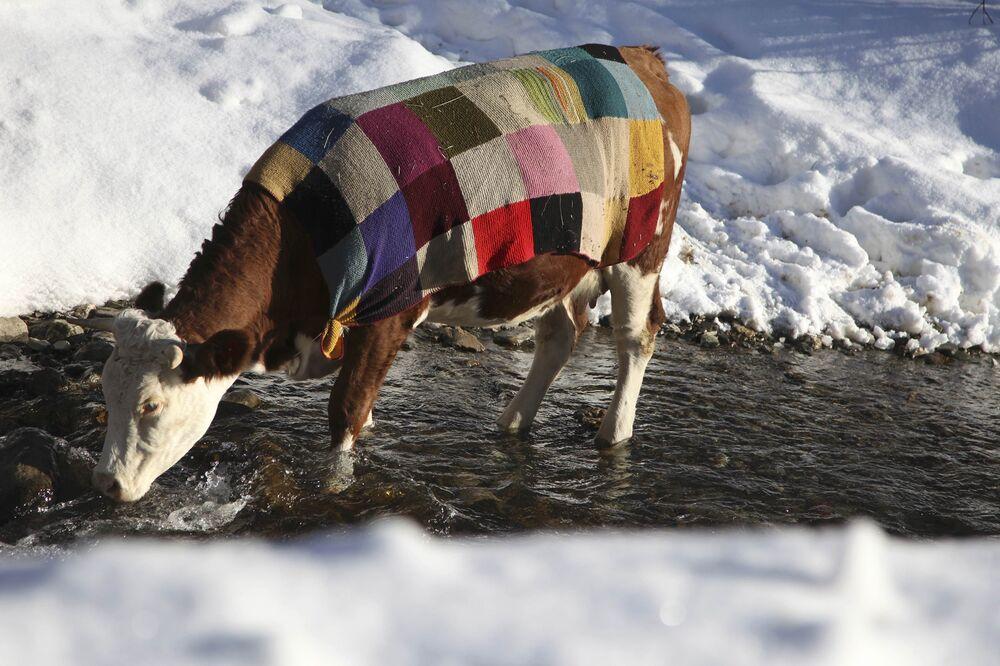 Les températures basses qui ont touché le Kosovo ont poussé beaucoup de maîtres à protéger leurs animaux de compagnie contre le froid