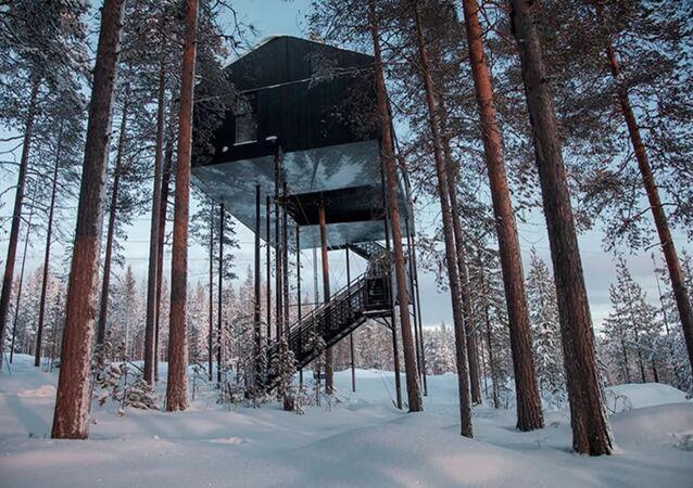 En Laponie, un hôtel dans les branches pour voir l'aurore polaire de plus près