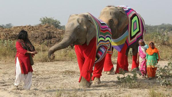 Pour aider les éléphants, ils leur tricotent d'énormes pulls - Sputnik France