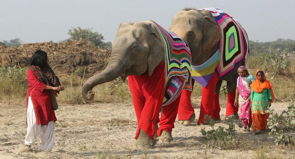 Pour aider les éléphants, ils leur tricotent d'énormes pulls
