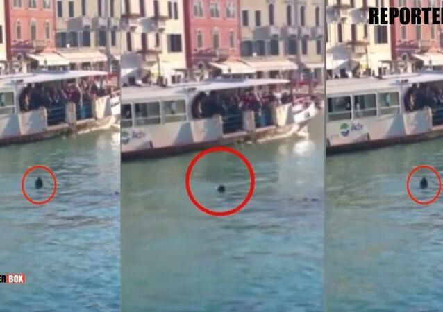 Un jeune réfugié africain s'est noyé à Venise sous les moqueries des badauds