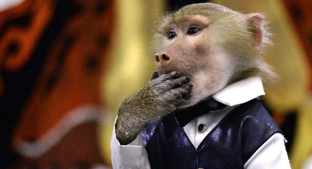 Un singe (image d'illustration)