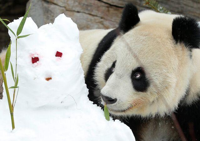 Panda et un bonhomme de neige