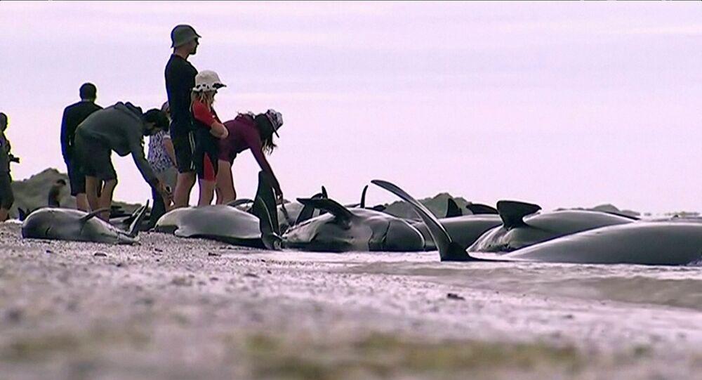 Dauphins morts en Nouvelle-Zélande, image d'illustration
