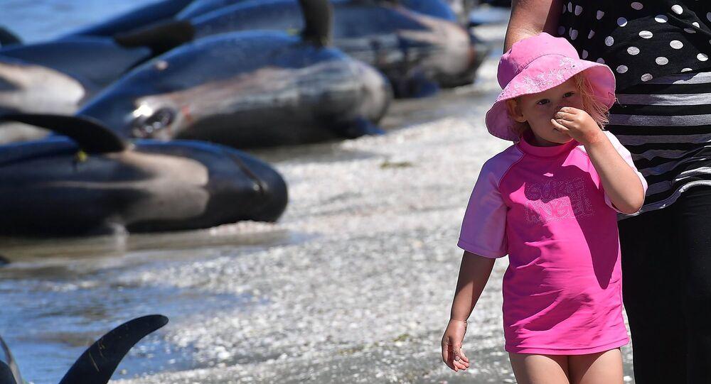 Plage recouverte de carcasses de baleines mortes, Nouvelle-Zélande