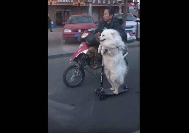 Quand un chien conduit sa propre trottinette électrique