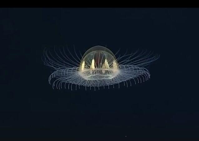 Une méduse «cosmique» au fond de la mer