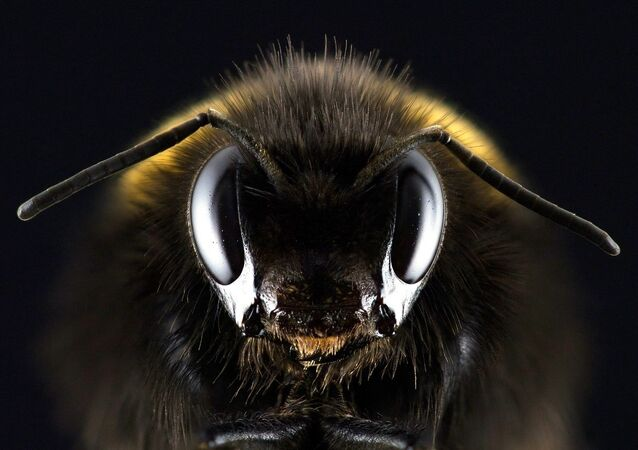 un robot-abeille