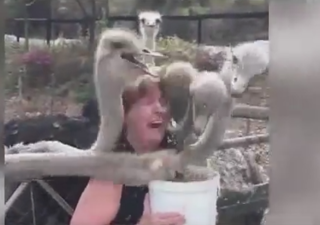 Ce qu'il ne faut jamais faire quand vous voulez nourrir des autruches