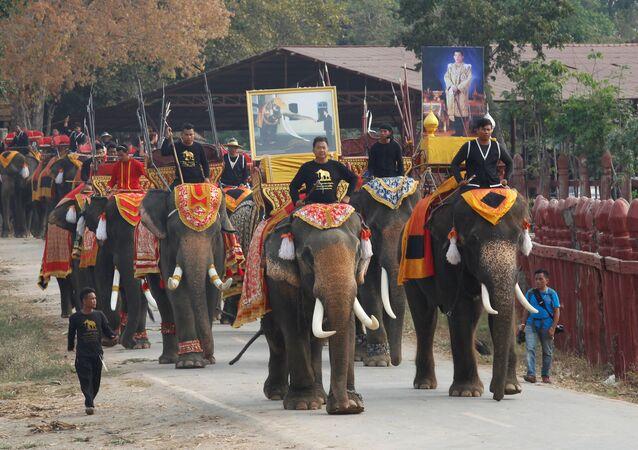 La journée nationale des éléphants en Thaïlande