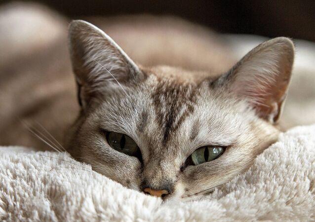 Le chat (image de démonstration)
