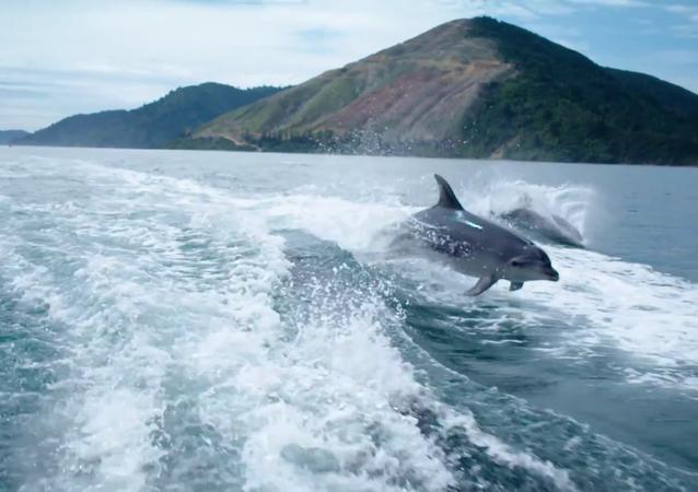 Des dauphins qui jouent avec la caméra