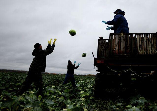 Des chercheurs évoquent le danger mortel du travail physique pour les hommes (image d'illustration)