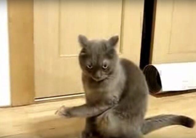 Un chat fasciné
