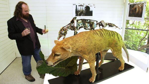 Un tigre de Tasmanie empaillé - Sputnik France