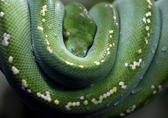 Python. Image d'illustration