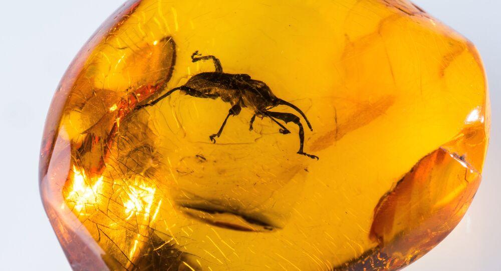 Du sang fossilisé d'un de nos lointains ancêtres retrouvé dans de l'ambre